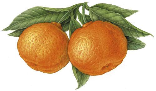 Agadir le pays du soleil poisson clementine et huile d'argan Clementine